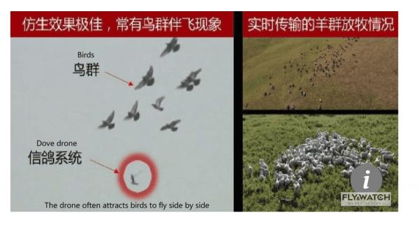 Niecodzienne przykłady zastosowania dronów
